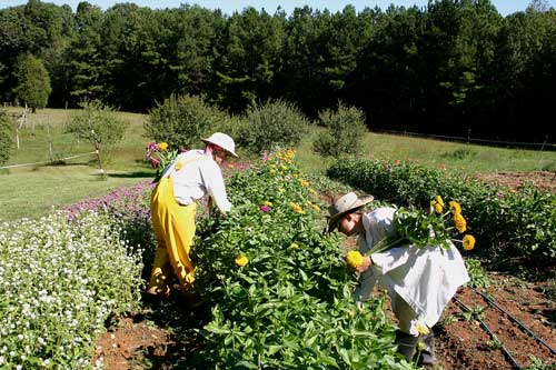 Cathy and Chris harvest zinnias in late September