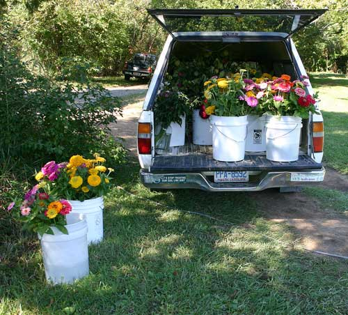 Truck loaded with flowers coming from the field