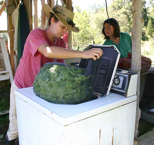 salad mix and other greens is washed and spun on two spin cycles' places in a net laundry bag