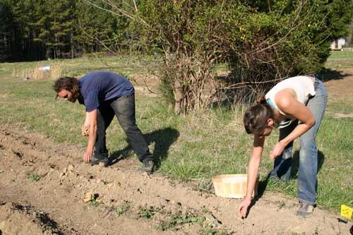 George and Megan planting potatoes