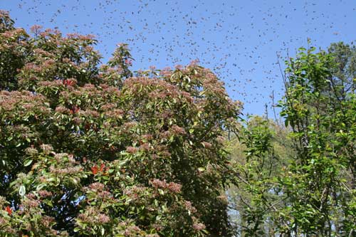 swarm surrounds bush