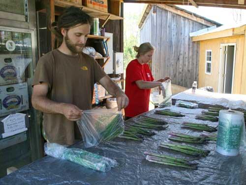 bagging asparagus