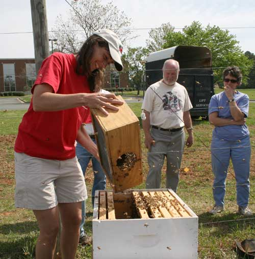 installing package bees