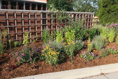 CHatham Mills Pollinator Garden