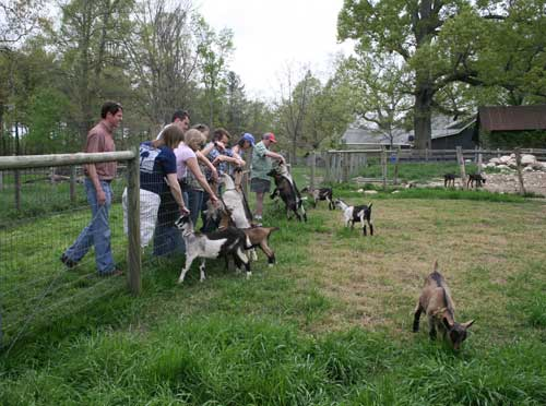 goats greet visitors