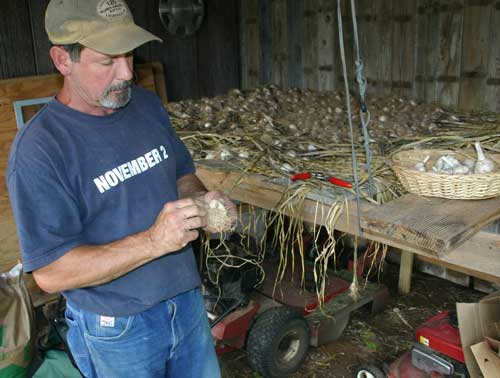 Mike cleans garlic