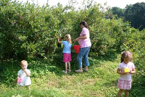 Hester family picks berries