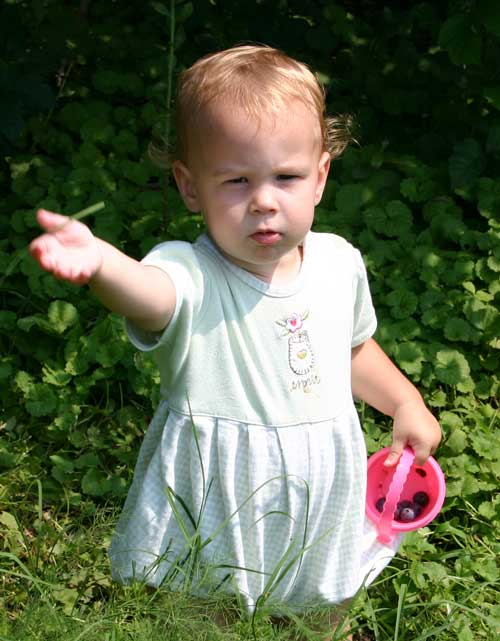 Lucy picks berries