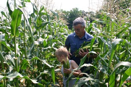 Bobby and Aaron pick corn