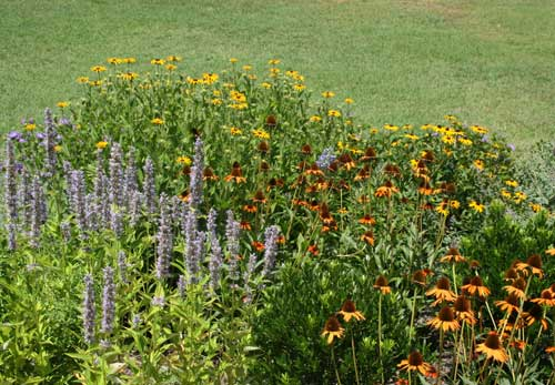 flowers in the pollinator garden