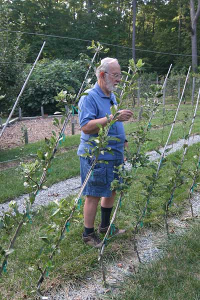Lee talks about pruning and training apple trees.