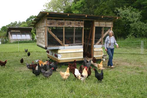 Perry-Winkle Farm | NC State Extension