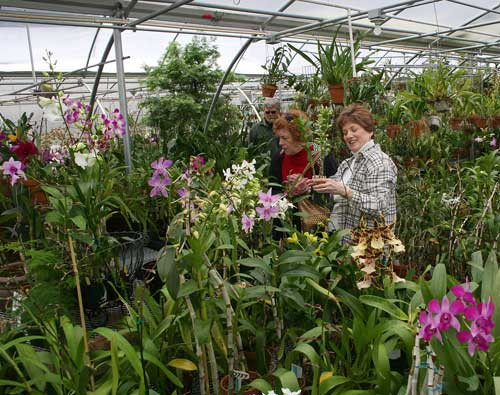 Customers select orchids