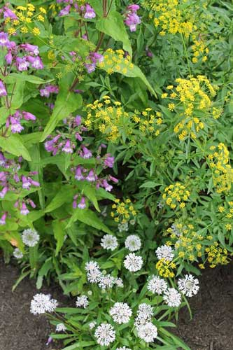 three plants that attract pollinators
