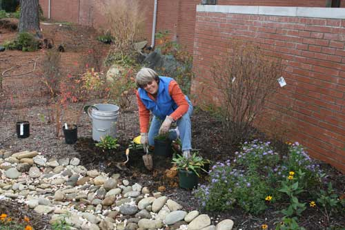 Louise Barnum plants more perennials in the fall.