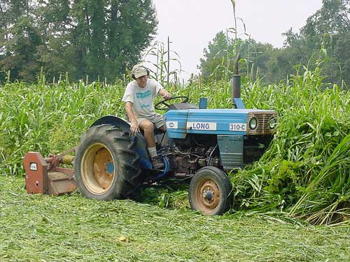 Alex mows a summer cover crop