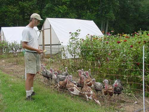 Alex checks on the young turkeys