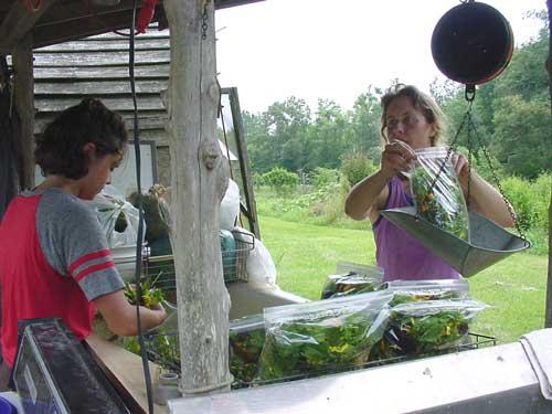 bagging salad mix