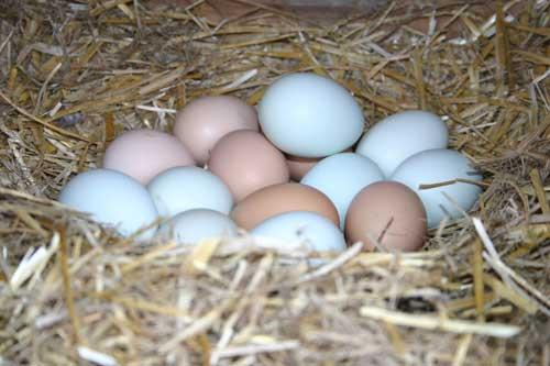 Egg cache