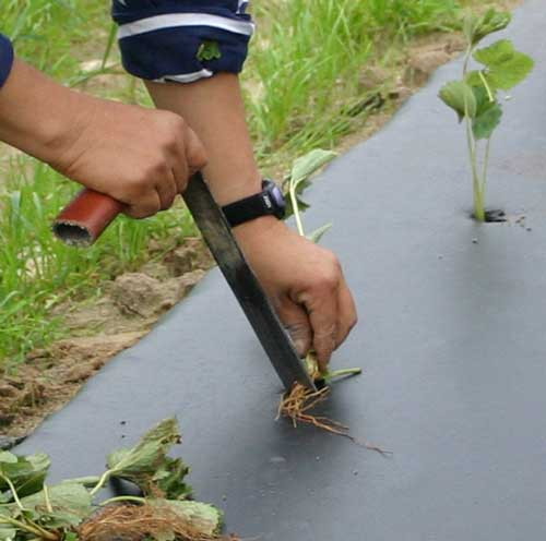 close-up of planting tool