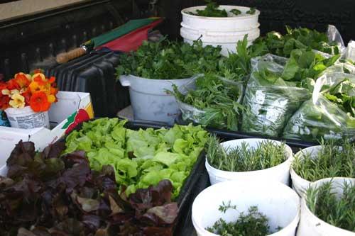 truck full of produce