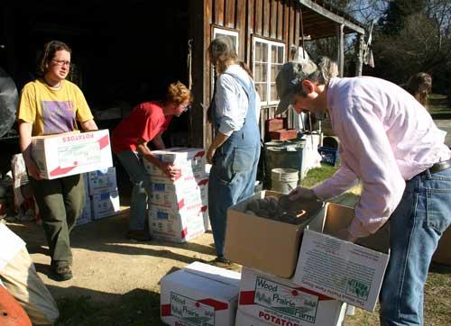 group sorting potatoes