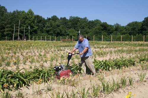 Jim cultivates between rows