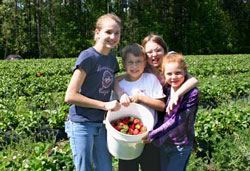 Hart family kids with berries
