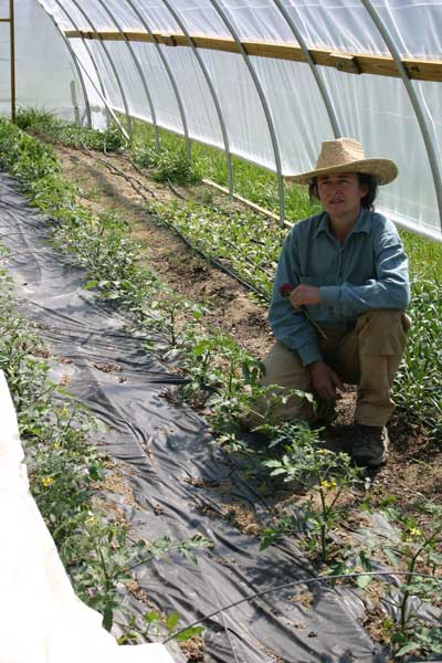 Leah with tomato crop in tunnel