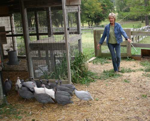 Norma herds the guineas into their shelter