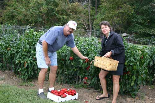 Ray and Amy Sugg pick peppers