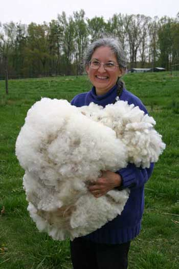 Teresa Fischer, owner of Singing Winds Farm in Silk Hope, shows off the fleece sheared from one of her sheep during the training.