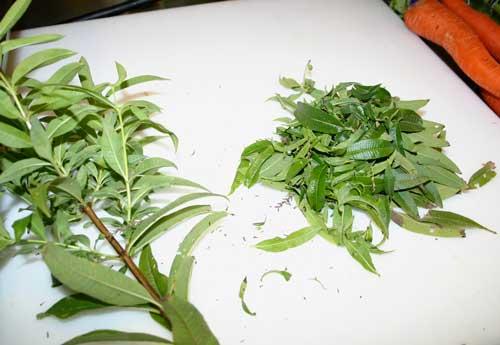 Fresh verbena leaves