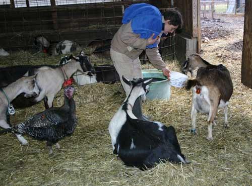 Celebrity Dairy, 144 Celebrity Dairy Way, Siler City, NC ...