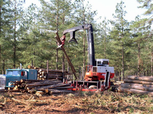 Loading timber truck during pine harvest