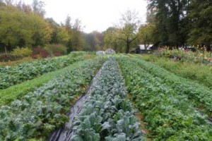 Cover photo for NRCS Funds Available to Assist Organic Growers
