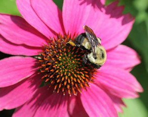 Cover photo for Happy National Pollinator Week!