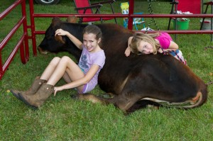 4-H kids Lily and Ellie with a yearling Jersey heifer at Ag Awareness Day