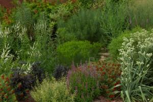 Cooperative Extension's Pollinator Paradise Garden