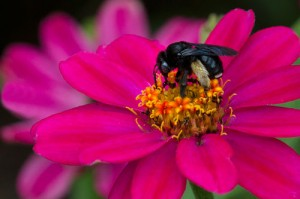Cover photo for Register Now for May Pollinator Garden Workshop & Garden Tour