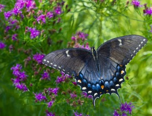 Cover photo for Register Now for September Pollinator Garden Workshop & Garden Tour