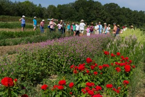 Cover photo for Photos From Cooperative Extension's Cut Flower Workshop