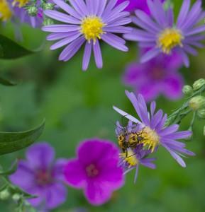 Cover photo for Morning Pollinator Garden Tour Monday October 5