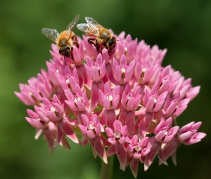 Cover photo for Two Pollinator Garden Tours This Week!