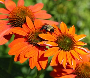 Cover photo for Pollinator Garden Tour Wednesday July 13