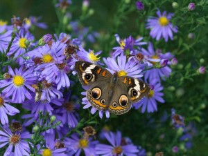Cover photo for Register Now for Fall Pollinator Garden Workshops & Garden Tours