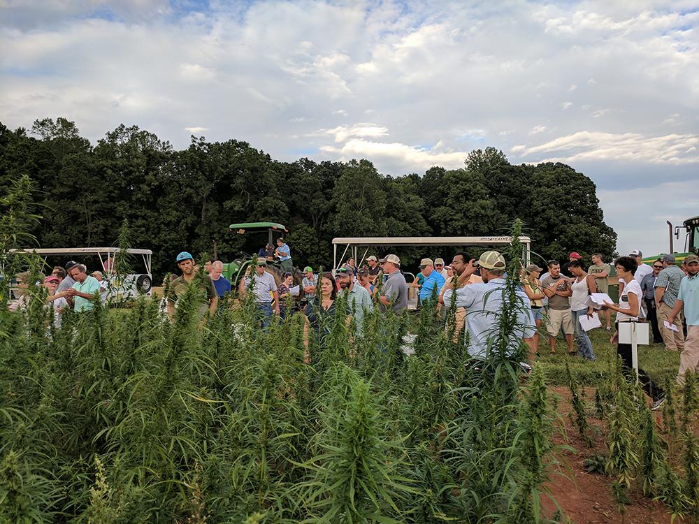 hemp field day