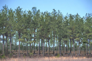Cover photo for Register Now for Extension's Tax Workshop for Forest Landowners