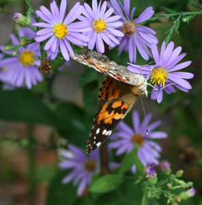 Cover photo for Two Pollinator Garden Tours in October!