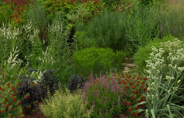 Pollinator Paradise Garden.